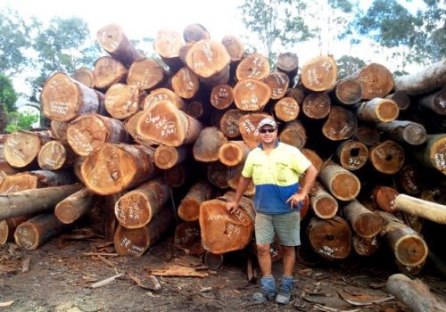 spotted gum timber suppliers Brisbane man infront of wood