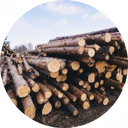 certified timber suppliers - wooden logs Sunshine Coast